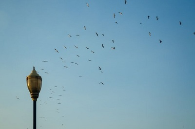 lamp, post, birds, animals, flying, sky, cloudless