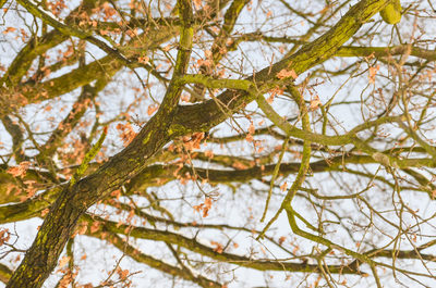 tree, trees, wood, forest, nature, moss, spring, season, bokeh, bark, branches