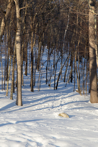 winter, snow, cold, season, forest, wood, nature, trees, branches, bark