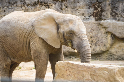 elephant, animal, wildlife, zoo, zoology, rocks, mammal