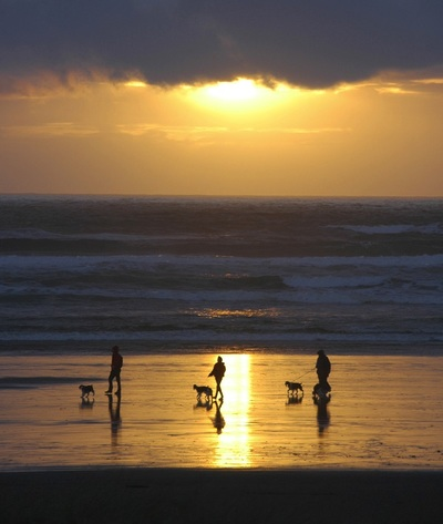 ocean, sea, water, sunset, sundown, horizon, people, dogs, walking, dog, animals, pets, reflection