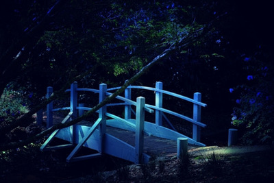 footbridge, white, night, forest, wood, trees, branches, nature, light