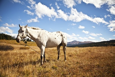 pasture, field, white, horse, animal, sky, clouds, rural, countryside, nature