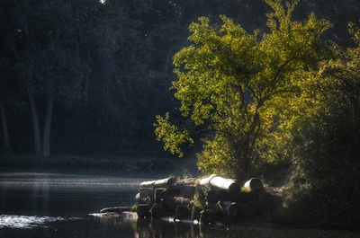 lake, river, water, nature, landscape, trees, branches, wood, forest