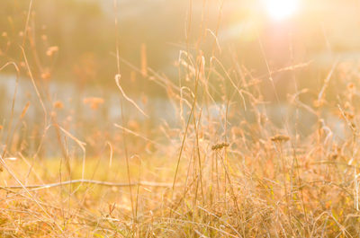 dry, grass, nature, sun, sunlight, plants, spring, summer, season