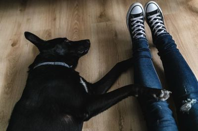 converse, shoes, footwear, legs, female, dog, canine, pet, animal, relaxation