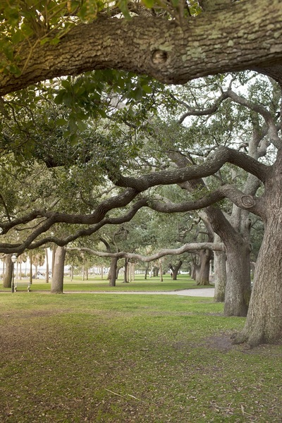 trees, nature, branches, bark, park, forest, grass, green