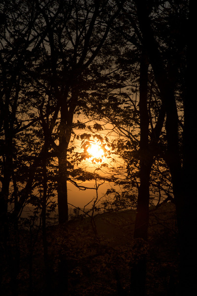 forest, wood, nature, trees, branches, sunrise, dawn, sunset, golden, hour