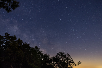 forest, night, sky, stars, starry, astronomy, trees, branches, treetops