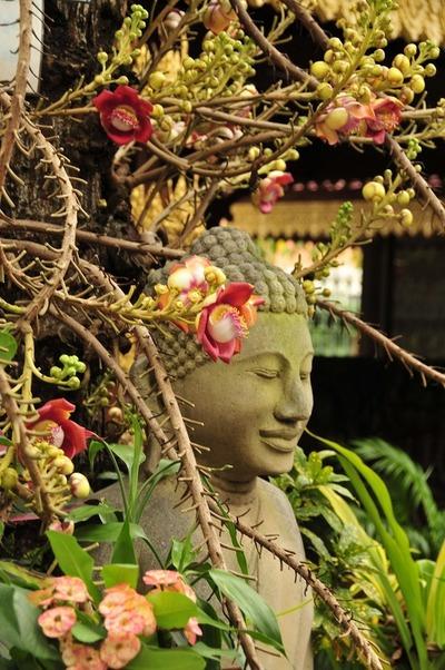 buddhist, statue, architecture, buddha, plants, exotic, branches