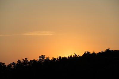 trees, treetops, branches, nature, sky, forest, sunset, dusk, dawn, sundown