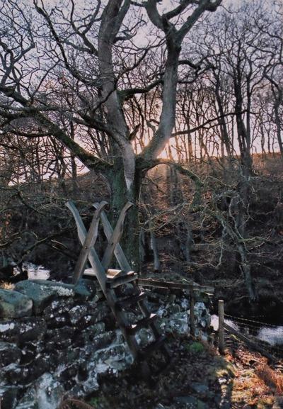 winter, ice, season, snow, forest, dawn, sunrise, nature, landscape, trees, sun