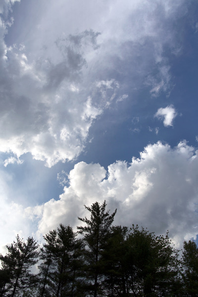 trees, treetops, nature, branches, forest, sky, clouds, wood