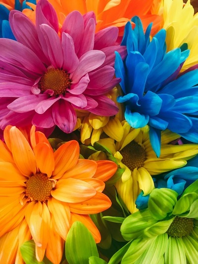flowers, flora, plants, botany, petals, blossom, garden, colorful, blue, pink
