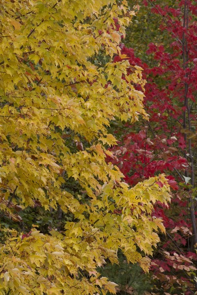 autumn, fall, trees, nature, leaves, season, branches