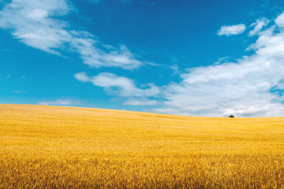 field, nature, landscape, sky, clouds, wheat, scenery, countryside