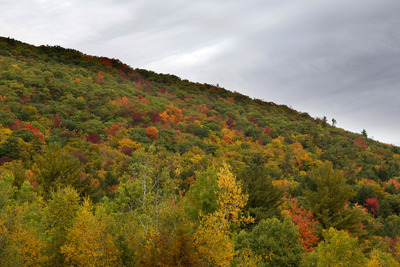 forests, nature, landscape, autumn, fall, trees, branches, treetops, sky