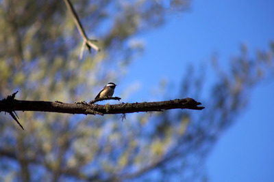 trees, branches, branch, bird, animal, beak, nature