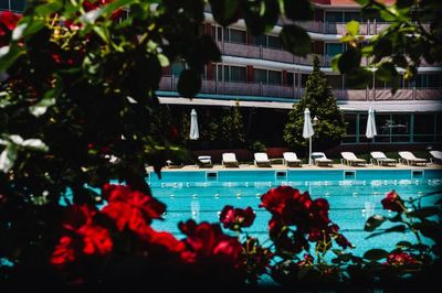 swimming, pool, blue, water, summer, vacation, hotel, resort, flowers
