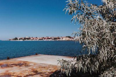 sea, water, bokeh, branches, summer, vacation, sky, destination