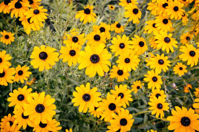 yellow, flowers, petals, flora, plants, meadow, botany, nature, blossom