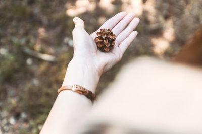 pine, cone, nature, female, hand, autumn, fall, season, bokeh