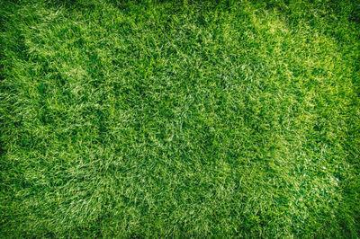 grass, nature, macro, green, botany, lawn, texture