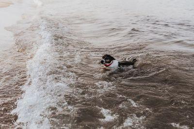 ocean, sea, water, dog, pet, animal, swimming, pets, summer, beach