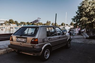car, automobile, vehicle, automotive, seagull, bird, animal, roof