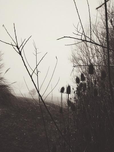 winter, season, cold, forest, wood, branches, black, white, monochrome, fog, mist, nature