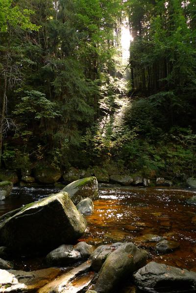 wood, forest, creek, river, water, nature, rocks, trees, vegetation, stones