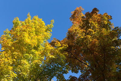 trees, branches, nature, sky, treetops, bark, forest, wood