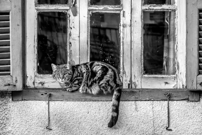 https://s3.amazonaws.com/sitebuilderreport-assets/stock_photos/files/000/039/287/small/Cat-on-the-window-of-an-old-house-7348-600x400.jpg?1508074262