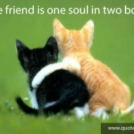A true friend is one soul in two bodies