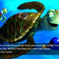 Crush The Turtle Finding Nemo Quote - I saw the whole thing dude