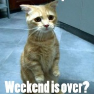 Monday Quotes - You say... weekend is over