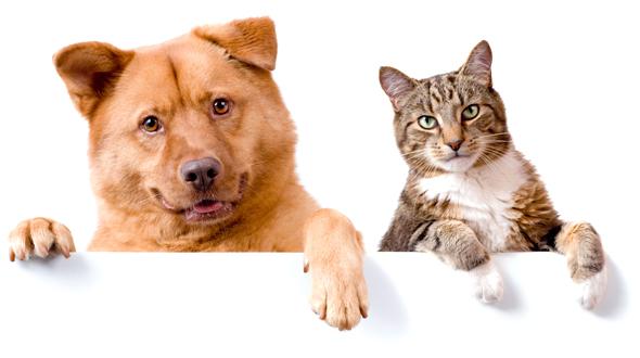 Carp Vet Cat and Dog