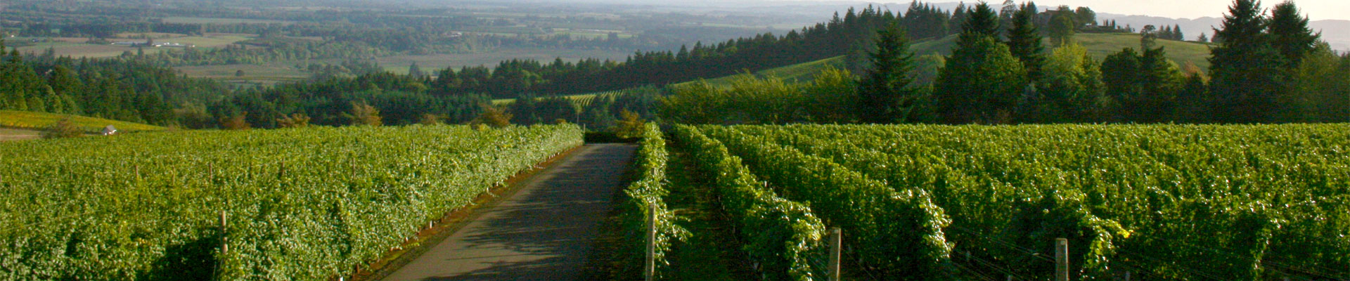 Be So Lucky Wine Tours
