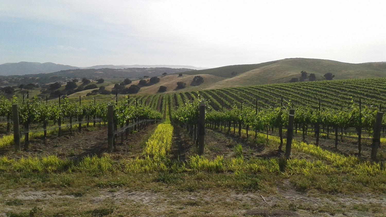 Santa Barbara Spring Wine Tour