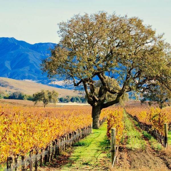 Sammy's Limos Wine Tours Santa Barbara
