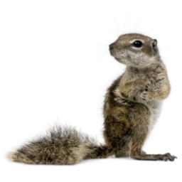 Bird & Squirrel Control O'Connor Pest Control Camarillo