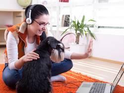 Phone/Skype Consultants K-Nine Solutions Santa Barbara
