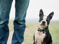 Finding the Right Dog K-Nine Solutions Santa Barbara