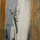 mantis thumb 2
