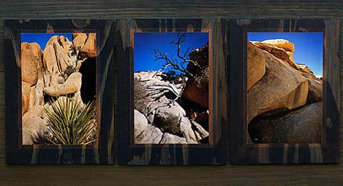 Joshua Tree Triptych 1