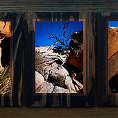 Joshua Tree Triptych 1 thumb