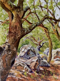 Boulders and Oaks, 9 X 12, pastel