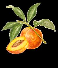 WYLD Peach