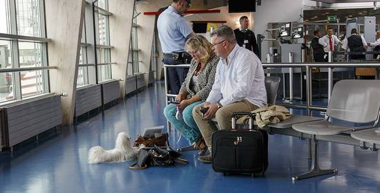 Traveling with Pets Internationally