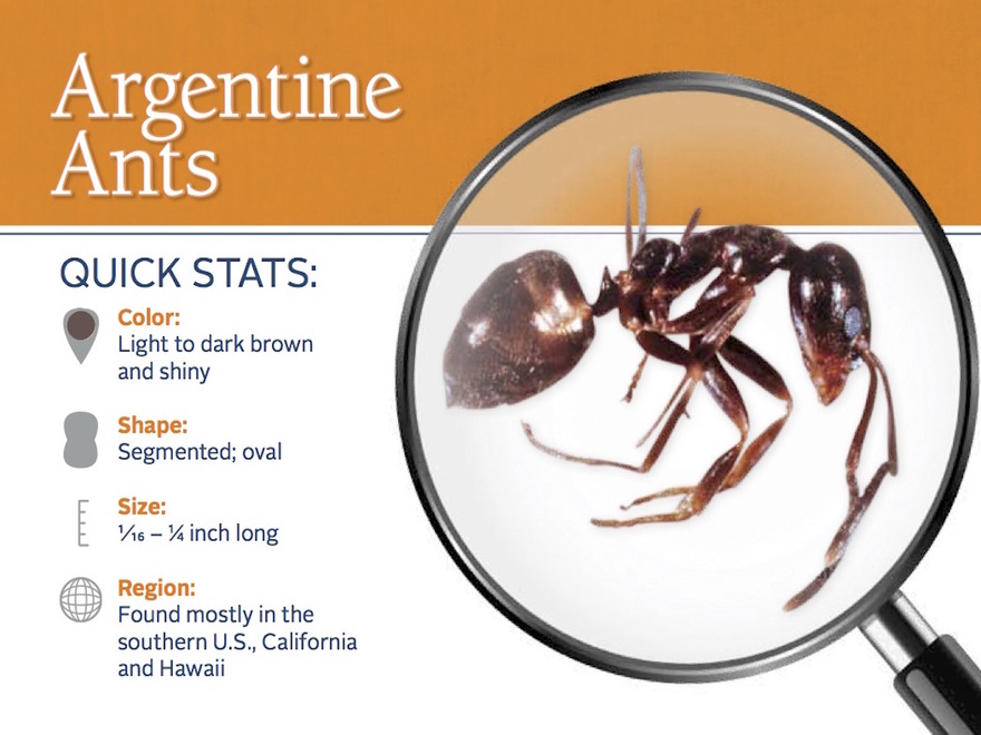 Dublin Argentinian Ants Exterminator Info